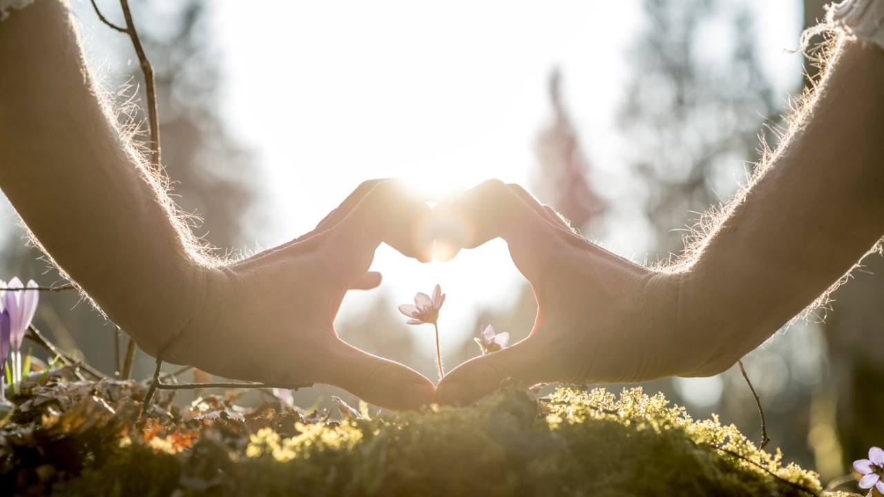 Conceptual Human Hands Forming Heart Shape Around Small Flower Growing on Grassy Ground Against Blurry Trees and Sunlight.
