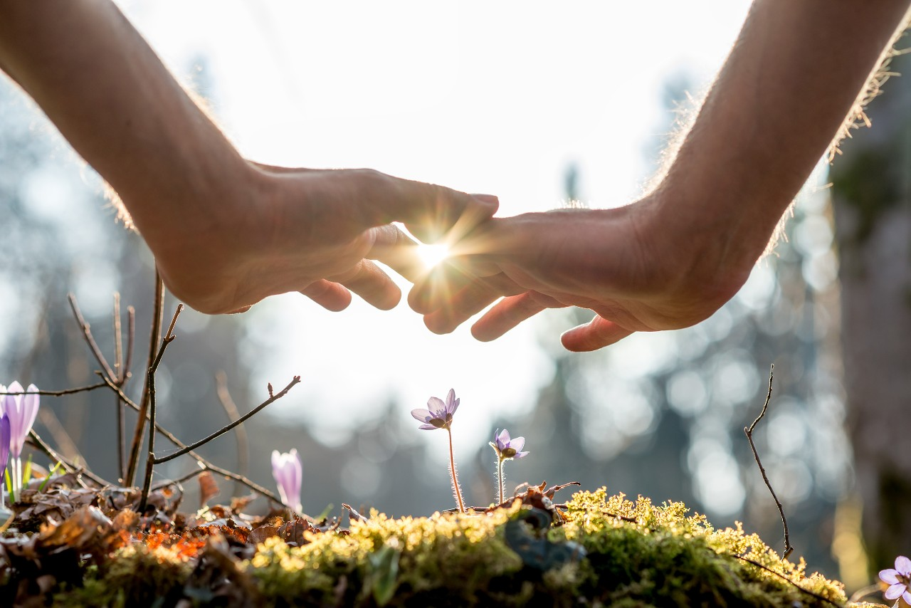 Close up Bare Hand of a Man Covering Small Flowers at the Garden with Sunlight Between Fingers.